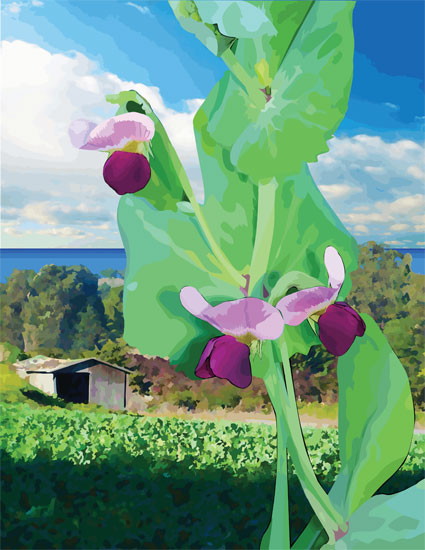 Coastal Sweet Peas