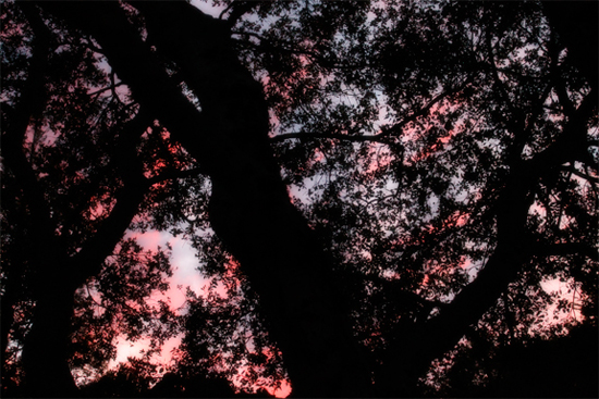 Sunset Through the Oaks 1